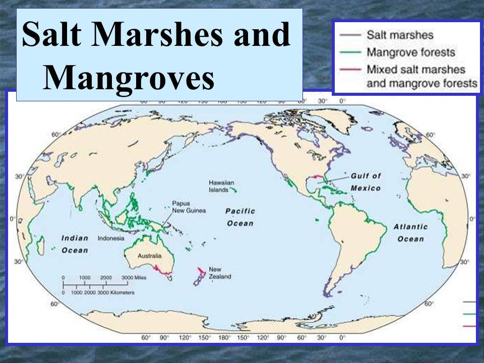 Salt Marshes and Mangroves