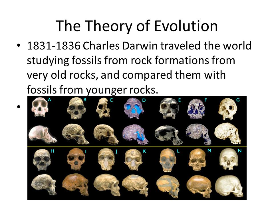 The Theory of Evolution 1831-1836 Charles Darwin traveled the world studying fossils from rock formations from very old rocks, and compared them with