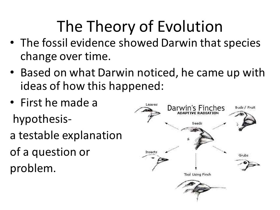The Theory of Evolution The fossil evidence showed Darwin that species change over time. Based on what Darwin noticed, he came up with ideas of how th