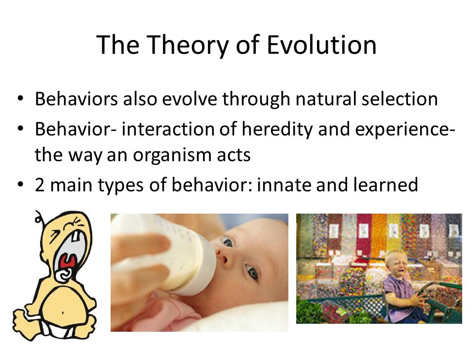 The Theory of Evolution Behaviors also evolve through natural selection Behavior- interaction of heredity and experience- the way an organism acts 2 m