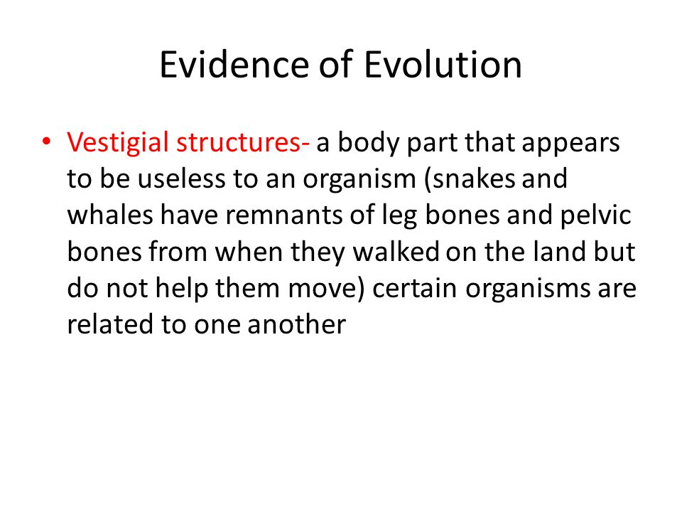 Evidence of Evolution Vestigial structures- a body part that appears to be useless to an organism (snakes and whales have remnants of leg bones and pe