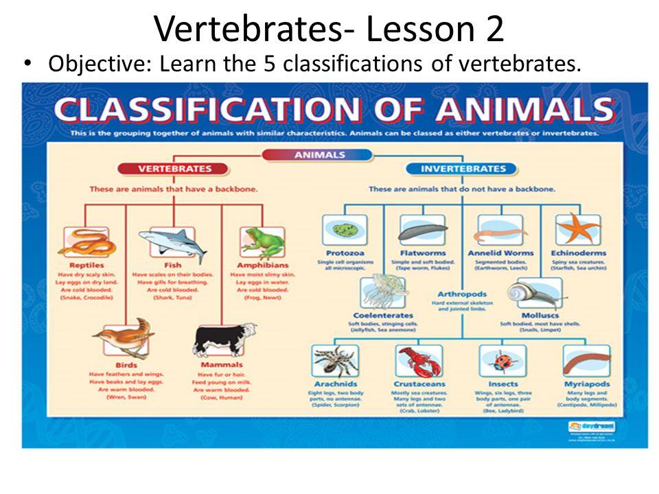 Vertebrates- Lesson 2 Objective: Learn the 5 classifications of vertebrates.