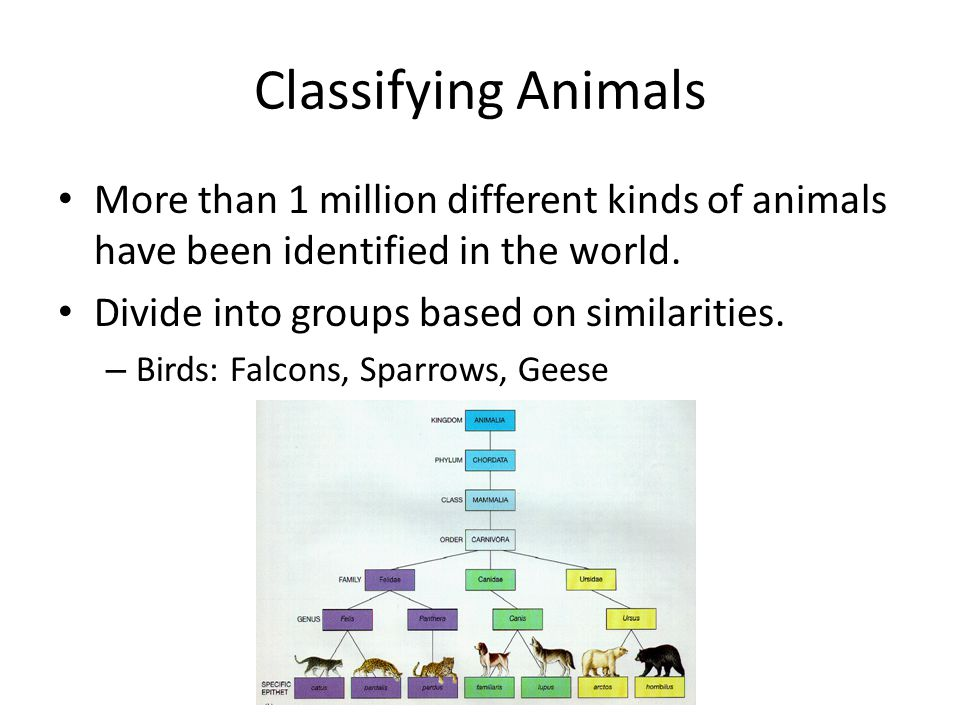 Classifying Animals More than 1 million different kinds of animals have been identified in the world. Divide into groups based on similarities. – Bird