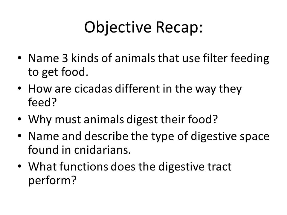 Objective Recap: Name 3 kinds of animals that use filter feeding to get food. How are cicadas different in the way they feed? Why must animals digest