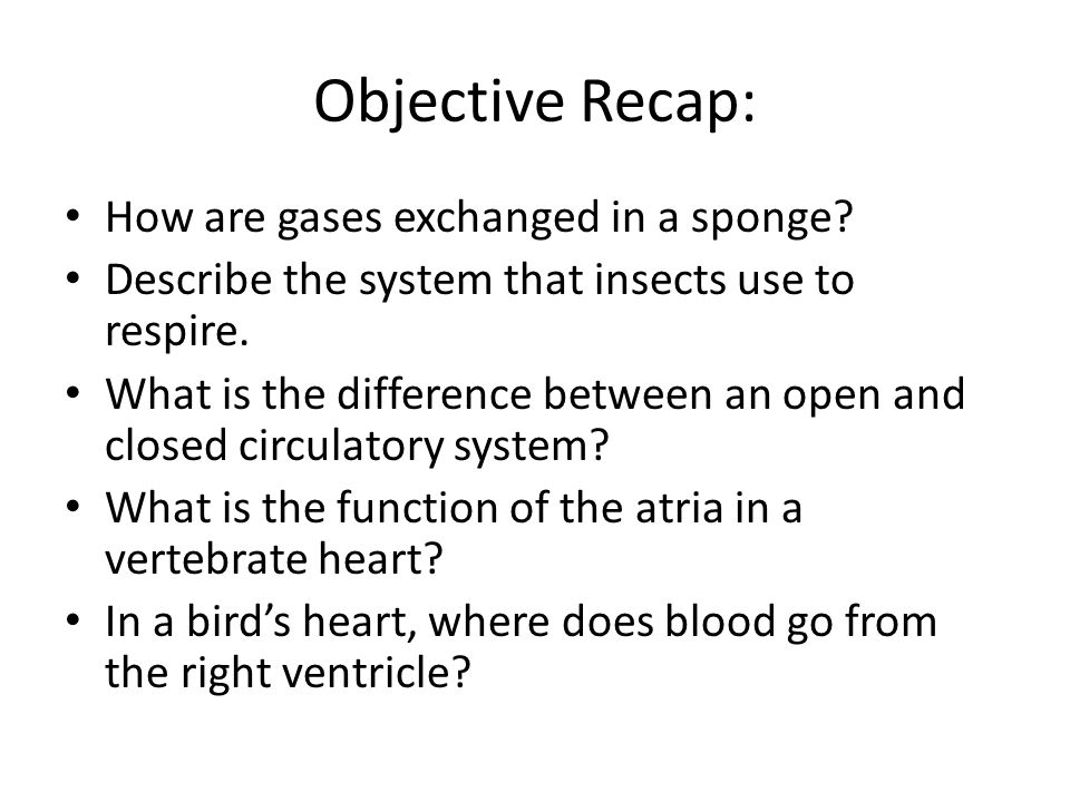 Objective Recap: How are gases exchanged in a sponge? Describe the system that insects use to respire. What is the difference between an open and clos