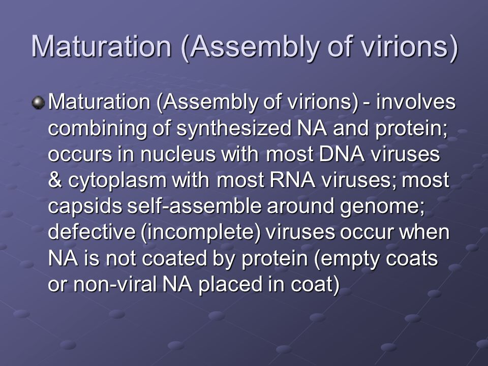 Maturation (Assembly of virions) Maturation (Assembly of virions) - involves combining of synthesized NA and protein; occurs in nucleus with most DNA