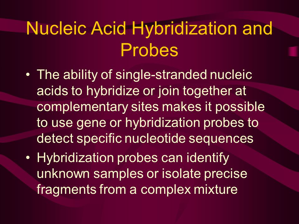 Nucleic Acid Hybridization and Probes The ability of single-stranded nucleic acids to hybridize or join together at complementary sites makes it possible to use gene or hybridization probes to detect specific nucleotide sequences Hybridization probes can identify unknown samples or isolate precise fragments from a complex mixture