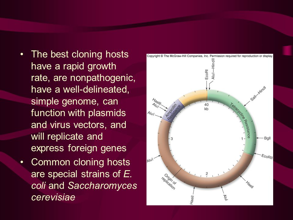 The best cloning hosts have a rapid growth rate, are nonpathogenic, have a well-delineated, simple genome, can function with plasmids and virus vectors, and will replicate and express foreign genes Common cloning hosts are special strains of E.