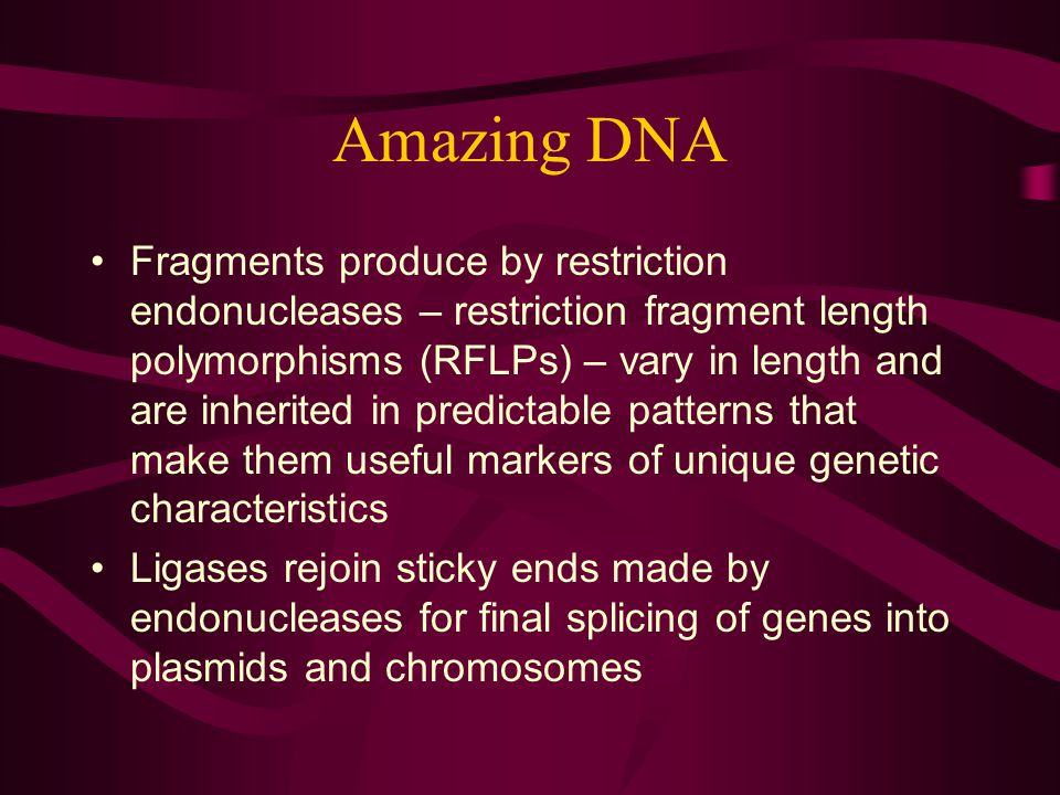 Amazing DNA Fragments produce by restriction endonucleases – restriction fragment length polymorphisms (RFLPs) – vary in length and are inherited in predictable patterns that make them useful markers of unique genetic characteristics Ligases rejoin sticky ends made by endonucleases for final splicing of genes into plasmids and chromosomes