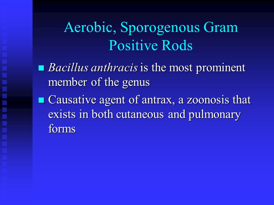 Aerobic, Sporogenous Gram Positive Rods Bacillus anthracis is the most prominent member of the genus Bacillus anthracis is the most prominent member of the genus Causative agent of antrax, a zoonosis that exists in both cutaneous and pulmonary forms Causative agent of antrax, a zoonosis that exists in both cutaneous and pulmonary forms