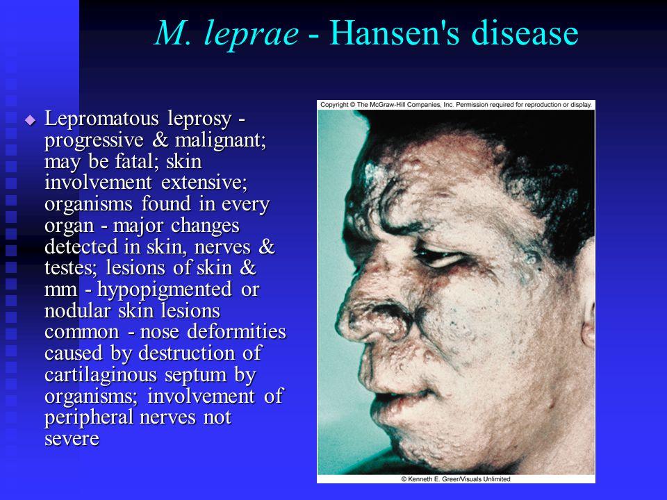 M. leprae - Hansen's disease  Lepromatous leprosy - progressive & malignant; may be fatal; skin involvement extensive; organisms found in every organ