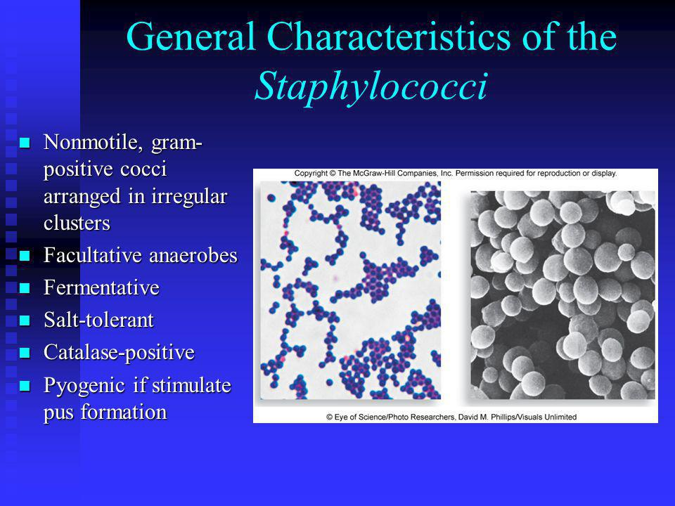 General Characteristics of the Staphylococci Nonmotile, gram- positive cocci arranged in irregular clusters Nonmotile, gram- positive cocci arranged i