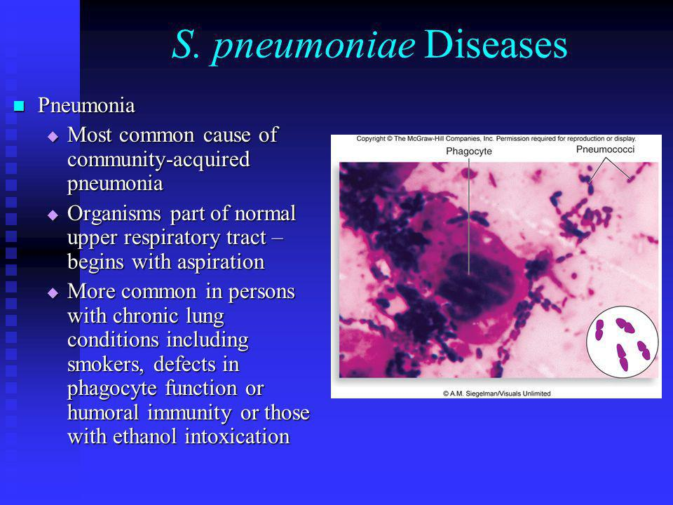 S. pneumoniae Diseases Pneumonia Pneumonia  Most common cause of community-acquired pneumonia  Organisms part of normal upper respiratory tract – be