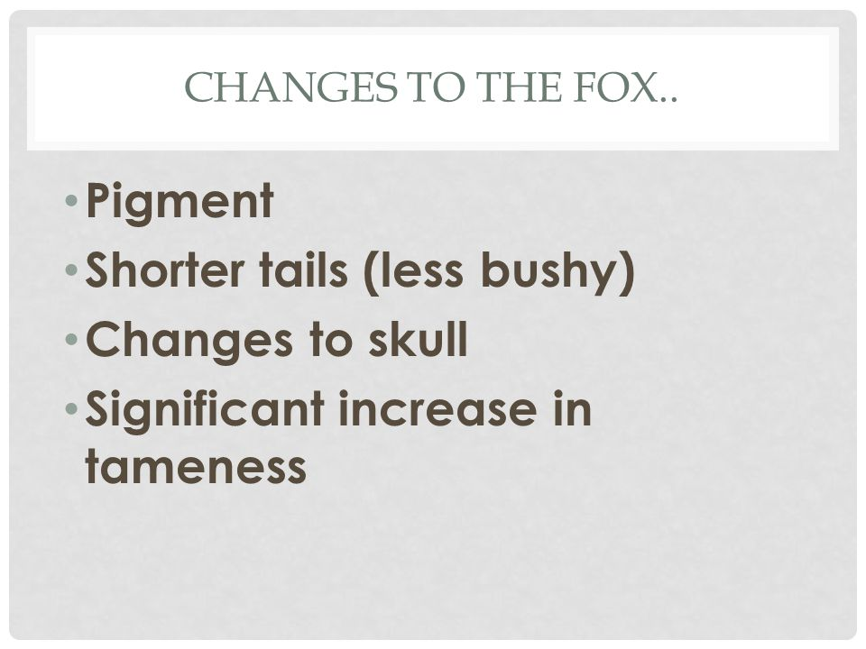 CHANGES TO THE FOX.. Pigment Shorter tails (less bushy) Changes to skull Significant increase in tameness