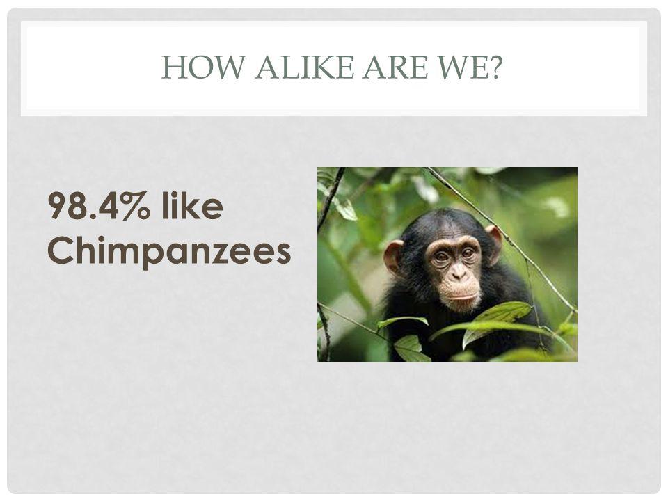 HOW ALIKE ARE WE? 98.4% like Chimpanzees