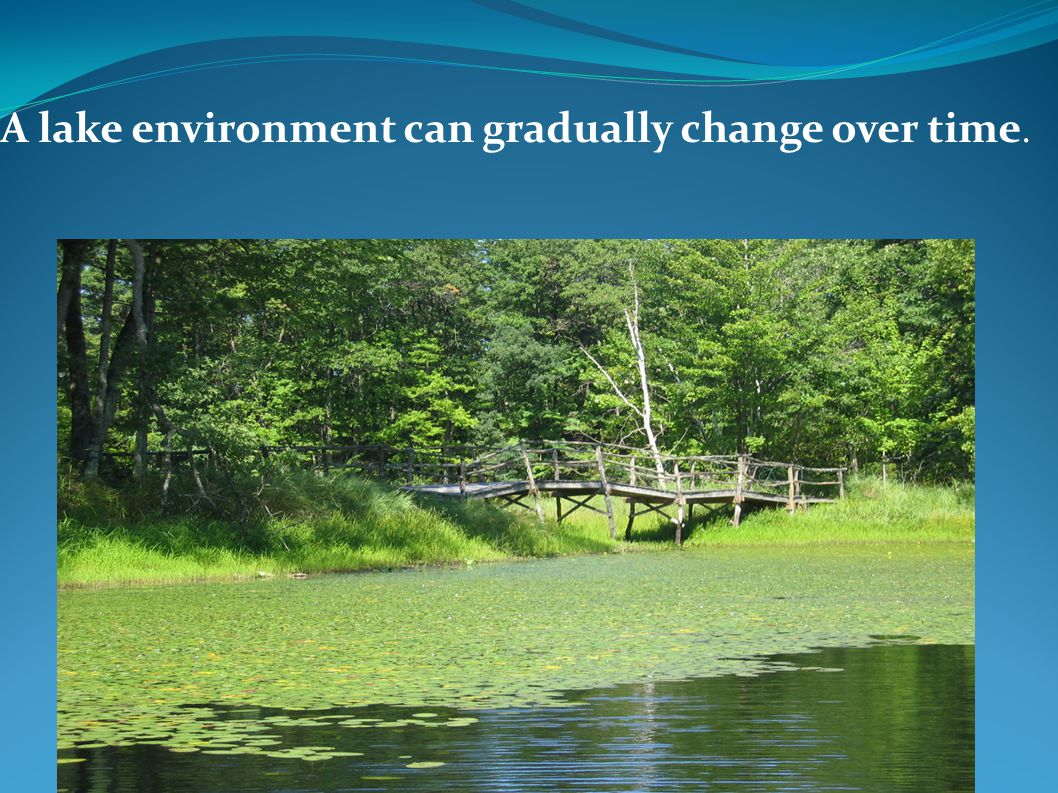 A lake environment can gradually change over time.