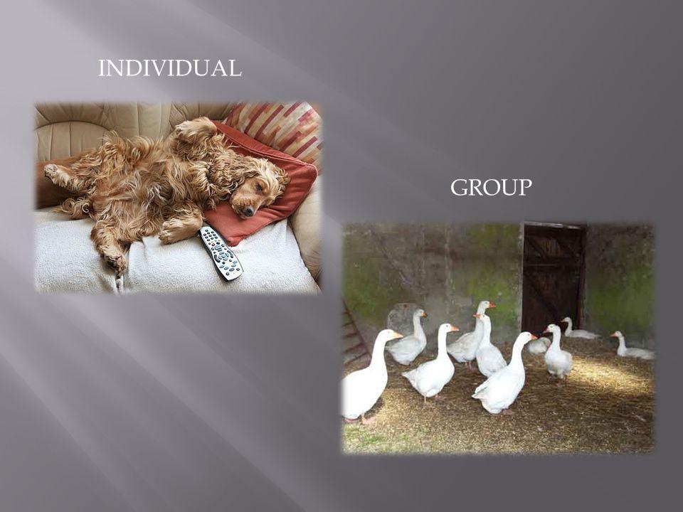INDIVIDUAL GROUP