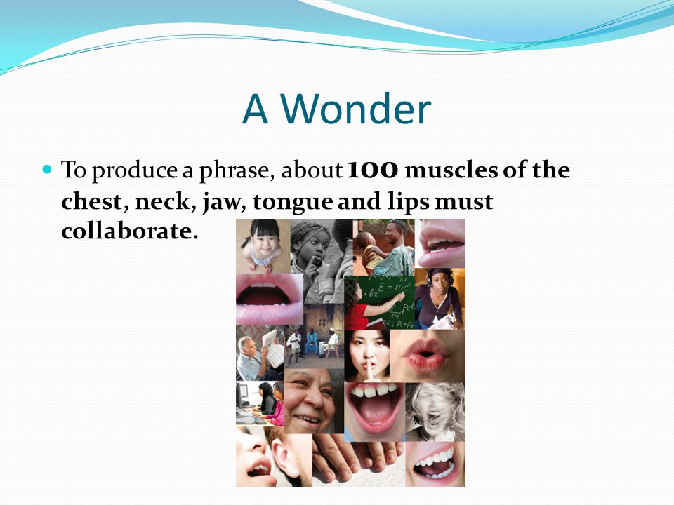 A Wonder To produce a phrase, about 100 muscles of the chest, neck, jaw, tongue and lips must collaborate.