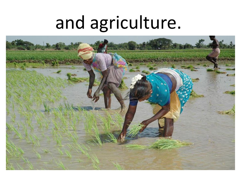 and agriculture.