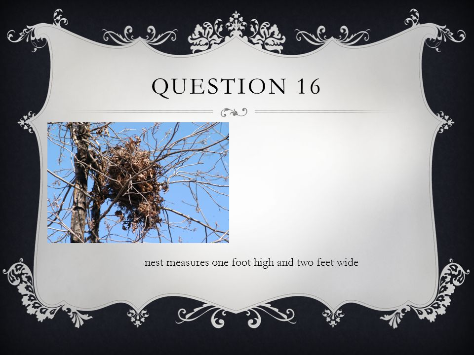 QUESTION 16 nest measures one foot high and two feet wide
