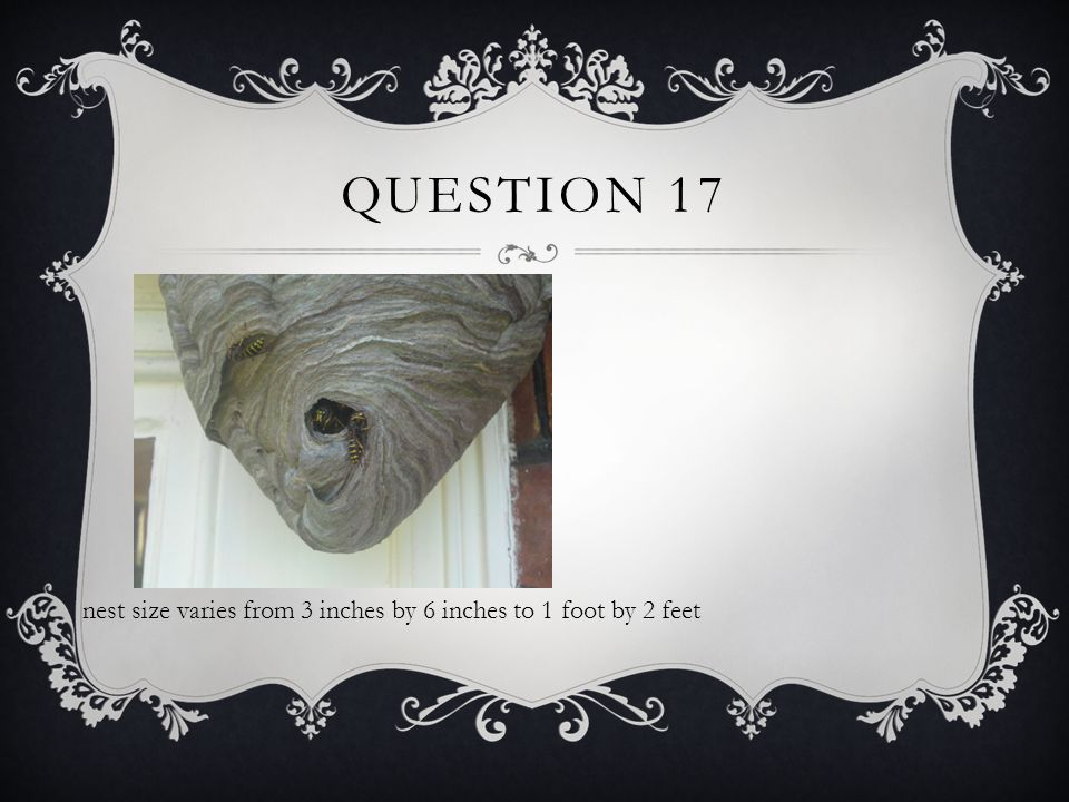 QUESTION 17 nest size varies from 3 inches by 6 inches to 1 foot by 2 feet