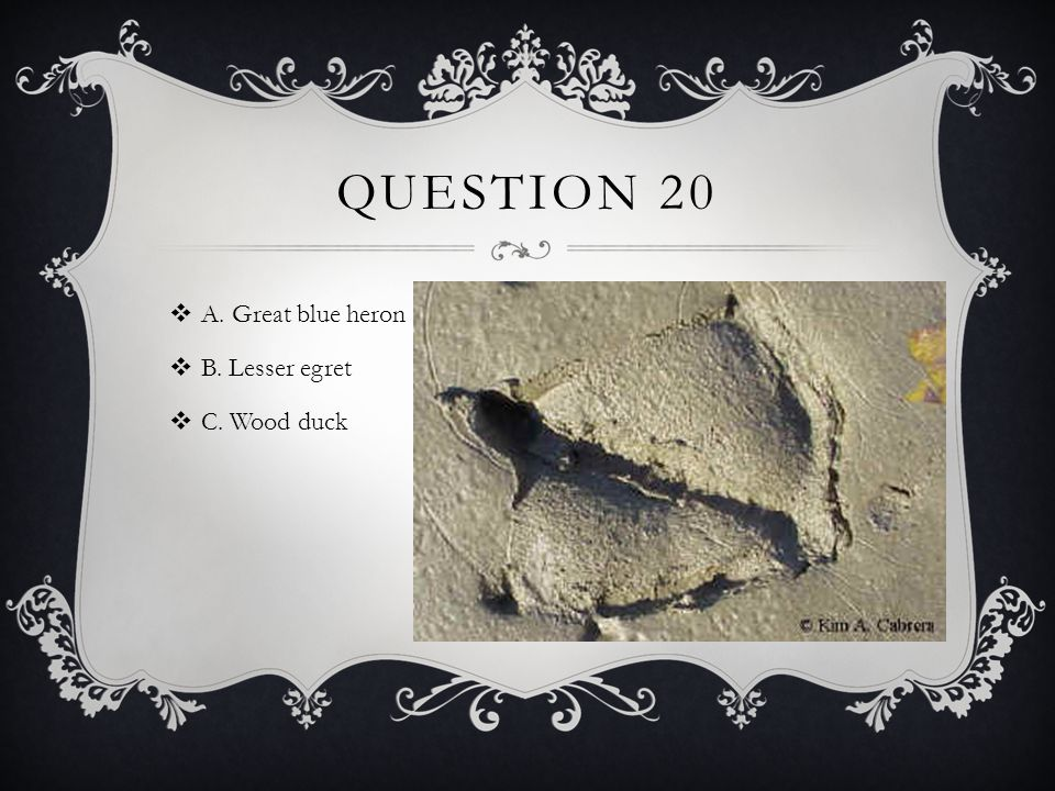 QUESTION 20  A. Great blue heron  B. Lesser egret  C. Wood duck