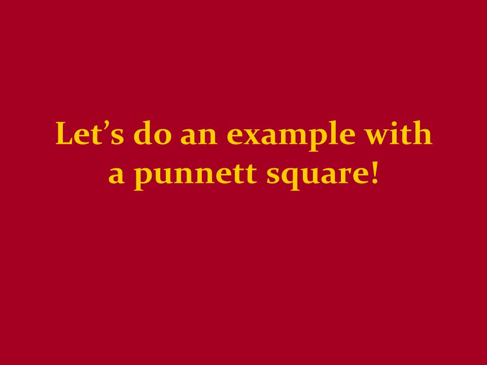 Let's do an example with a punnett square!