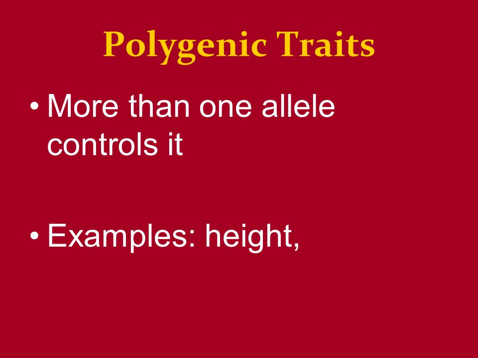 Polygenic Traits More than one allele controls it Examples: height,