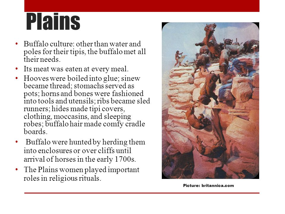 Plains Buffalo culture: other than water and poles for their tipis, the buffalo met all their needs.