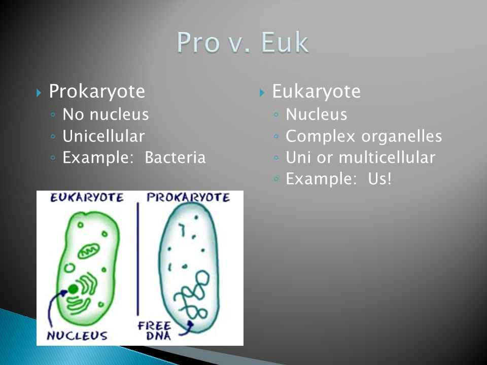  Prokaryote ◦ No nucleus ◦ Unicellular ◦ Example: Bacteria  Eukaryote ◦ Nucleus ◦ Complex organelles ◦ Uni or multicellular ◦ Example: Us!