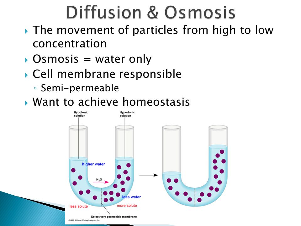  The movement of particles from high to low concentration  Osmosis = water only  Cell membrane responsible ◦ Semi-permeable  Want to achieve homeo