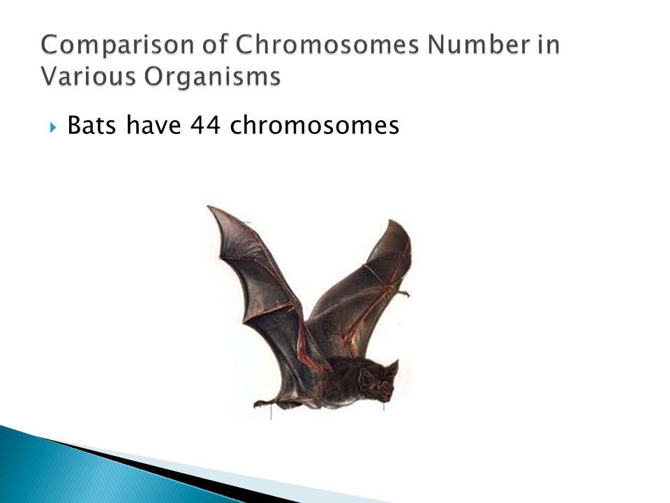  Bats have 44 chromosomes