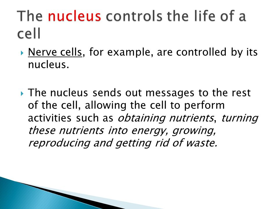  The nucleus controls the functions of a living cell.