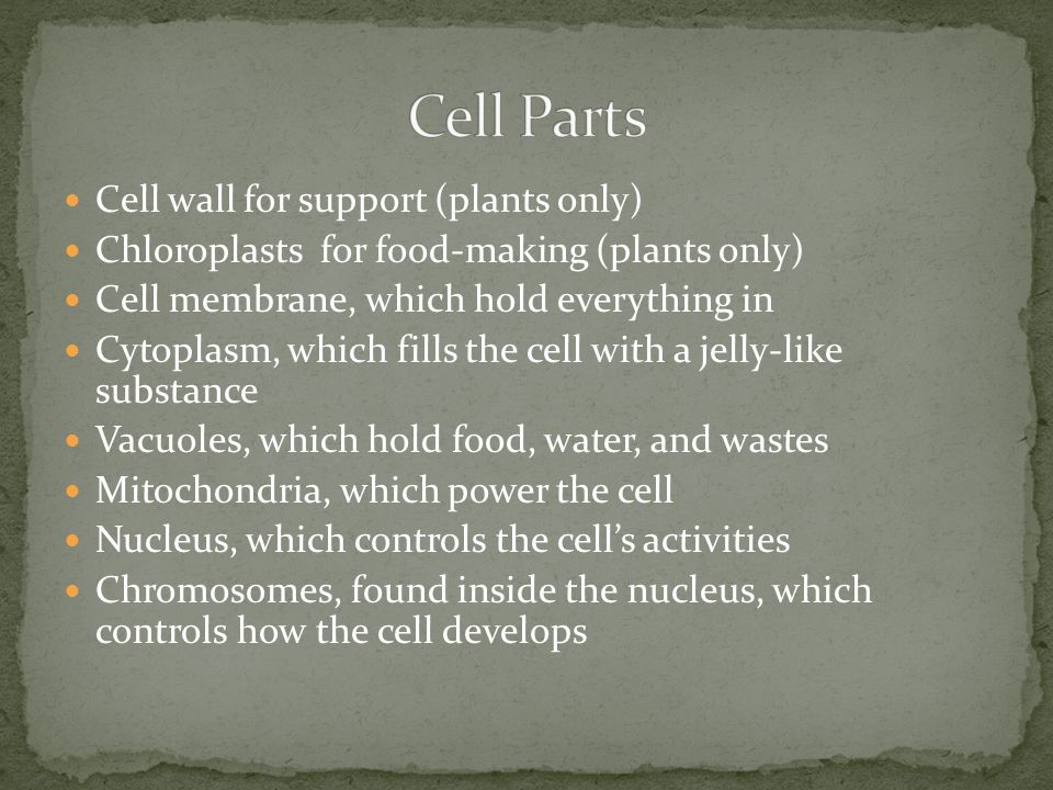 Organisms are made from cells Cells form tissues and organs that help the organism live Cells contain different parts that do different jobs Plant cel