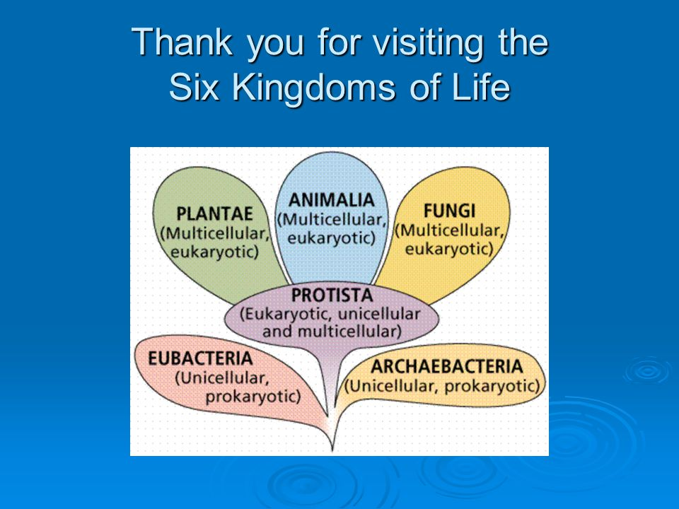 Thank you for visiting the Six Kingdoms of Life