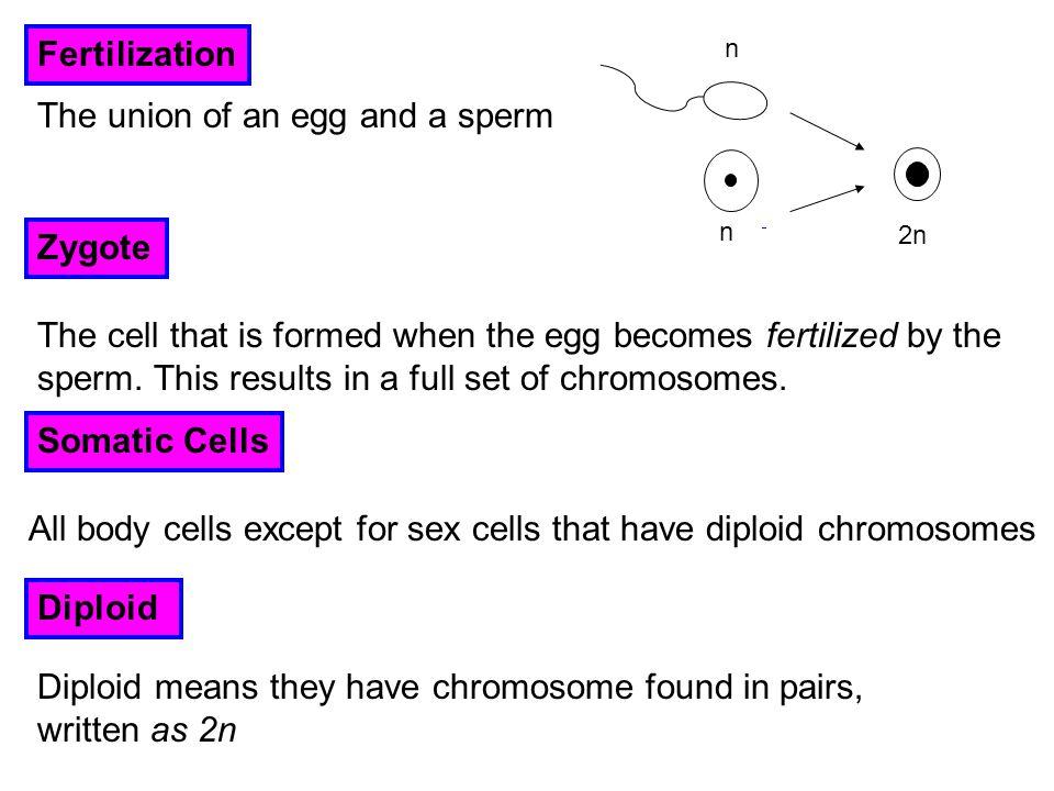 Meiosis – division error Chromosome pair