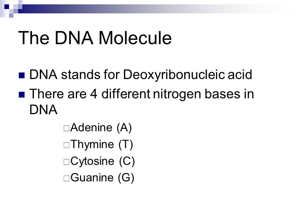 The DNA Molecule DNA stands for Deoxyribonucleic acid There are 4 different nitrogen bases in DNA  Adenine (A)  Thymine (T)  Cytosine (C)  Guanine