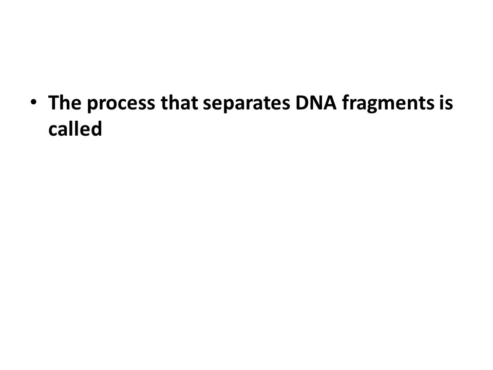 The process that separates DNA fragments is called