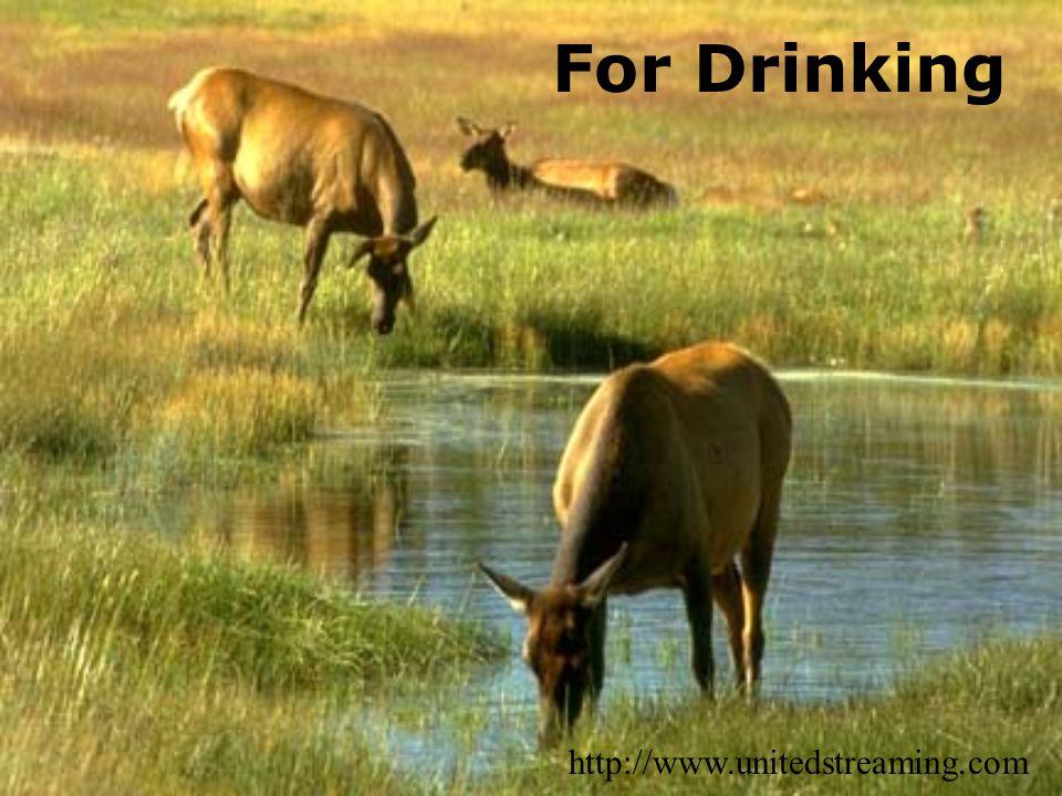 For Drinking http://www.unitedstreaming.com