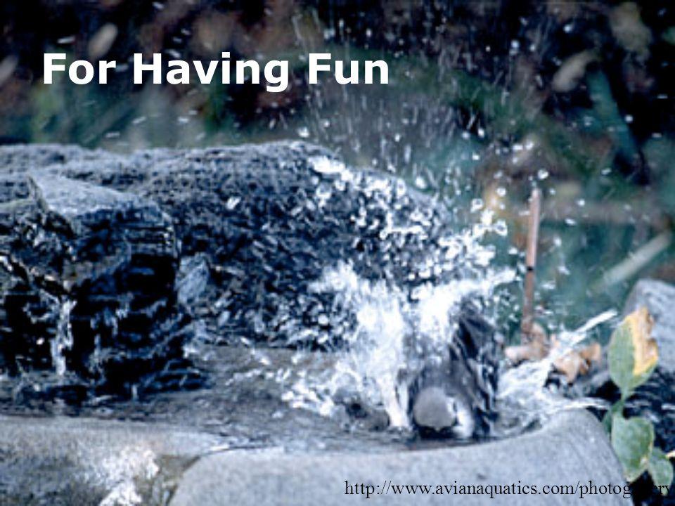 For Having Fun http://www.avianaquatics.com/photogallery/