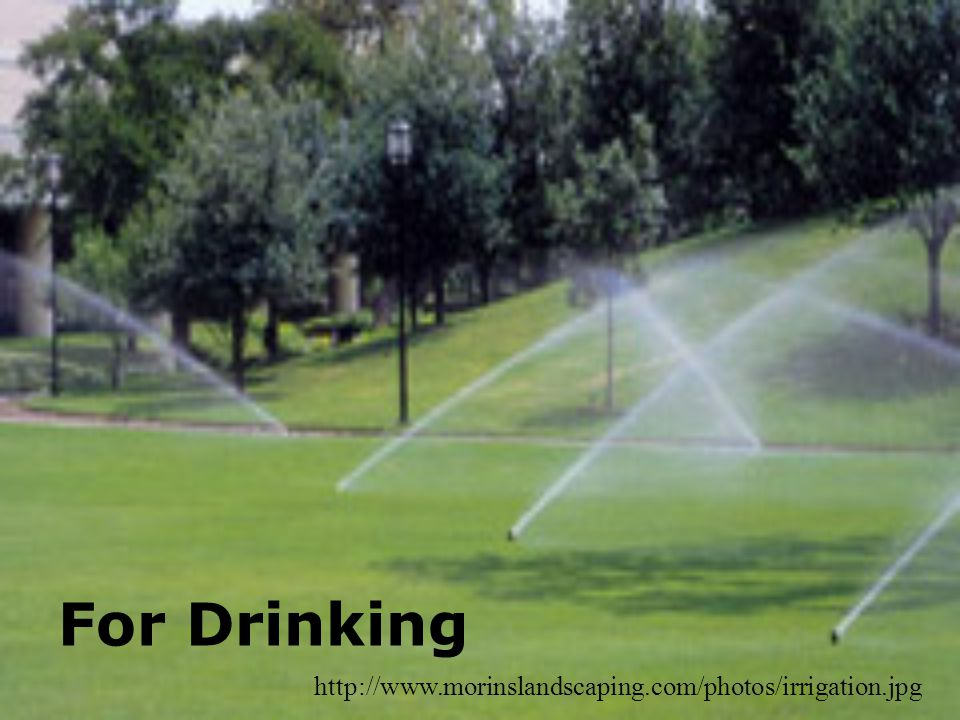 For Drinking http://www.morinslandscaping.com/photos/irrigation.jpg