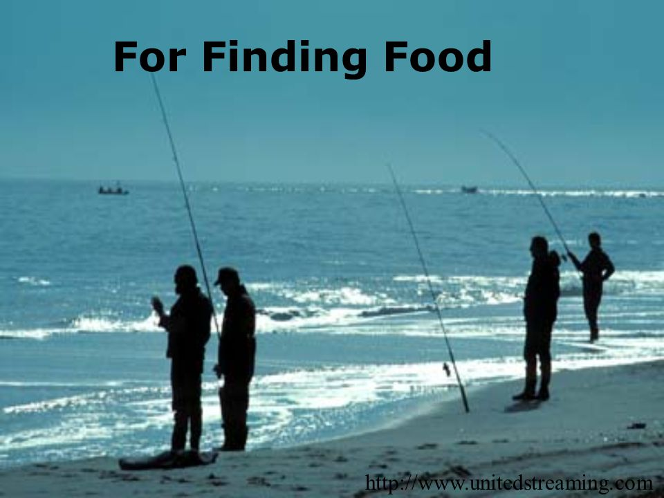 For Finding Food http://www.unitedstreaming.com