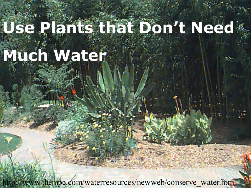 Use Plants that Don't Need Much Water http://www.thempc.com/waterresources/newweb/conserve_water.htm