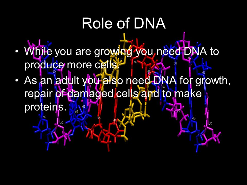 Role of DNA While you are growing you need DNA to produce more cells. As an adult you also need DNA for growth, repair of damaged cells and to make pr