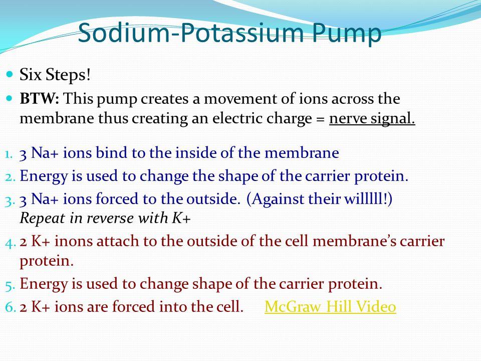 Sodium-Potassium Pump Six Steps.