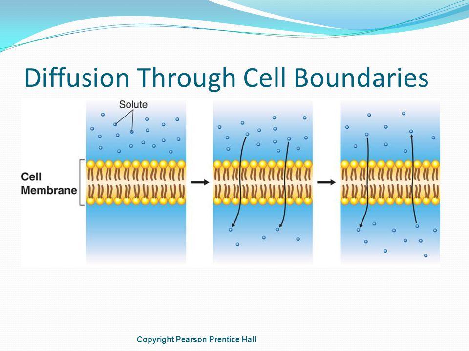 Diffusion Through Cell Boundaries Copyright Pearson Prentice Hall