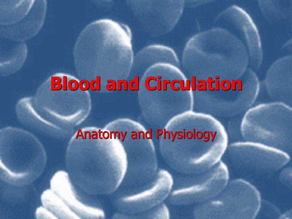 Blood and Circulation Anatomy and Physiology