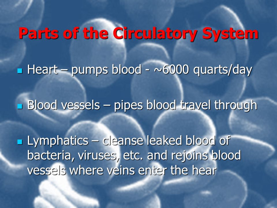 Parts of the Circulatory System Heart – pumps blood - ~6000 quarts/day Heart – pumps blood - ~6000 quarts/day Blood vessels – pipes blood travel throu