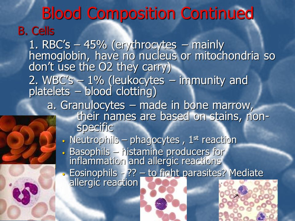 Blood composition Continued Cells b.