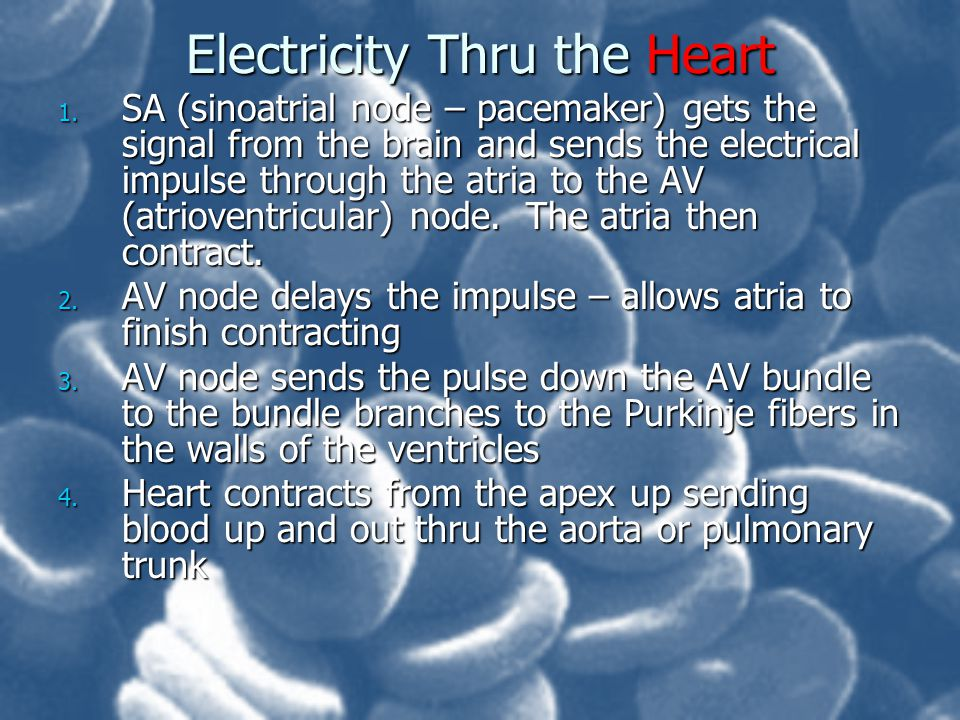 Electricity Thru the Heart 1. SA (sinoatrial node – pacemaker) gets the signal from the brain and sends the electrical impulse through the atria to th